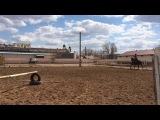 Кокжал-волшебный конь! Сегодня мы прыгали)