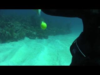 Что будет, если разбить яйцо под водой