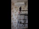 Мой попугай-говорушка Гриша