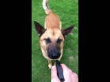 Как собака реагирует на воду))