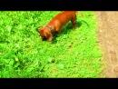 """Собака """"Вельта"""" в парке"""