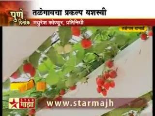 Как индийцы выращивают клубнику на гидропонике