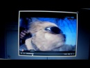 Собака-байкер: мото пёс Стич. Каскад ТВ, Наше утро.