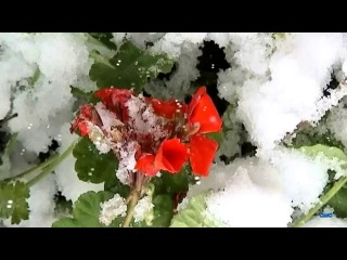 Красивое видео  Дыхание зимы  Цветы и снег