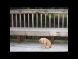 грустное видео про собак((((