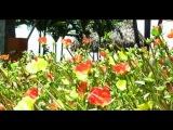 Небольшой ролик о городе Педаси, Панама