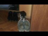 новый котишка играет с пумой)))