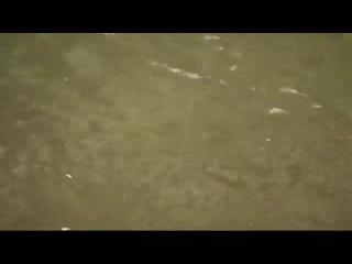 Ловля ручьевой форели видео