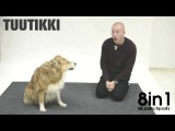 Как собаки реагируют на правильный человеческий лай / How Dogs react to Human Barking?