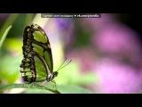 «Animal Planet» под музыку Натали - Ветер с моря дул   [http://vkontakte.ru/public22738020]               музыка,грустная,душевная,слим,slim,птаха,гуф,guf,centr,LOC DOG,rap,hip-hop,бах ти,bahh tee,Hann,лирика,любовь,2011,нигатив,Schokk, триада,Очень красивый рэп про любовь,25/17,смоки мо 00. Picrolla