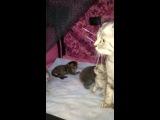 Котята подросли, в коробке тесно)