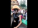 Призрак хачика танцует