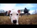 Мир глазами собаки. Прекрасный день, прогулка в парке...