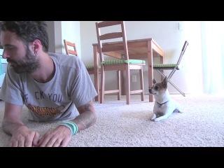 Ник Белло и его забавный пес чихуахуа Панчо