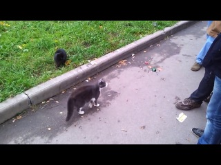 Кошки ловят квадрокоптер D