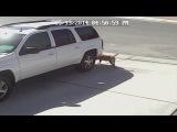 Ужас, Кот спас ребенка от собаки | Vine