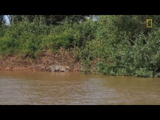 Охота гепарда на крокодила полная версия