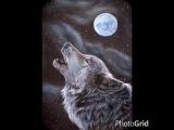 Собачья жизнь с глазами волка