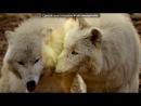 «Со стены белый волчонок» под музыку Калинов Мост - Уходили из дома .