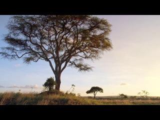Микро Монстры с Дэвидом Аттенборо (2013) Эпизод 6-Колония