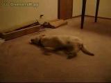Бегущая во сне собака