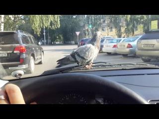 Необычный пассажир или все любят Busta Rhymes)))