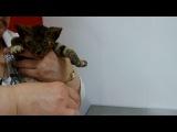 Живой шашлык из котёнка. Работа живодёров.