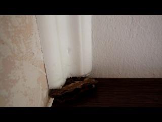 Бабочка крылышками под