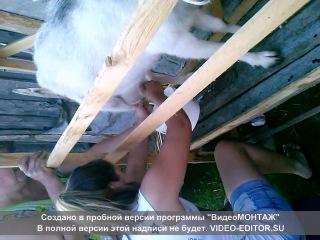 хахахха,учусь доить козу:D