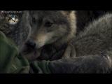 Алексей Брянцев-Волчья стая