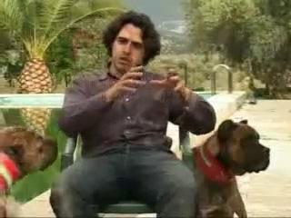 Аланские боевые собаки