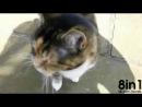 Кот мяукает очень глубоким басом  Cat has a crazy deep meow