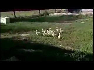 Приколы С Животными Подборка Смех До Слез!