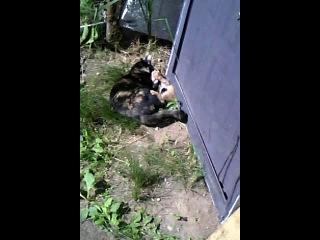Кошка играет с котёнком, а кажется что убивает