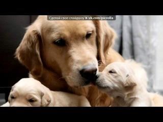 «Со стены Собака - друг человека ツ» под музыку ♥Ильюшка,солнышко я тебя так люблю...♥ты у меня самый лучший на земле!Я люблю тока тебя! - И тебе не надо НИКОГДА ревновать,потому што я люблю ТОКА тебя!Я скучяю по тебе!Знай што я люблю тока одного человека.....ТЕБЯ!!Илюшка,зай не ревнуй и прости если я тебе больно делаю!!ЛЮБЛЮ ТЕБЯ МАЛЬЧИК МОЙ!!. Picrolla