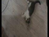 няшный котёнок :) зовут Барсик