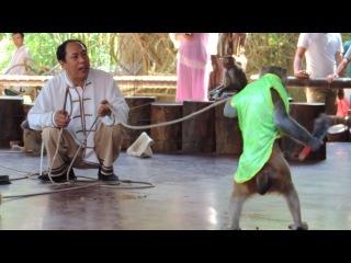 вот так в Китае обезьяны отстаивают свои права!!