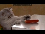 «где моя сосиска» под музыку DJ Valtovich - А где моя сосиска?! :DDDD. Picrolla