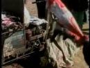 Земляне Полная версия Документальный фильм, разоблачающий жестокое паразитирование человечества на животных в разных сферах жизн