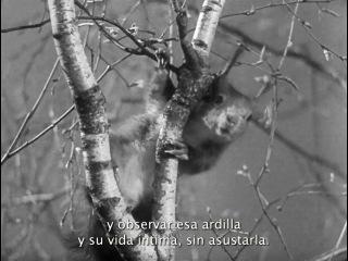 La Regla Del Juego Jean Renoir 1939