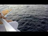 Стая акул