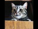 Наша говорящая кошка=)
