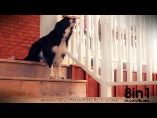 Невероятные трюки с эквилибристикой собаки бордер-колли по имени Нана/ Nana the Border Collie's Amazing Balancing Tricks