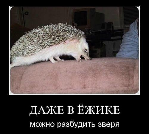 Скачать абоде фотошоп на русском общем, внешний