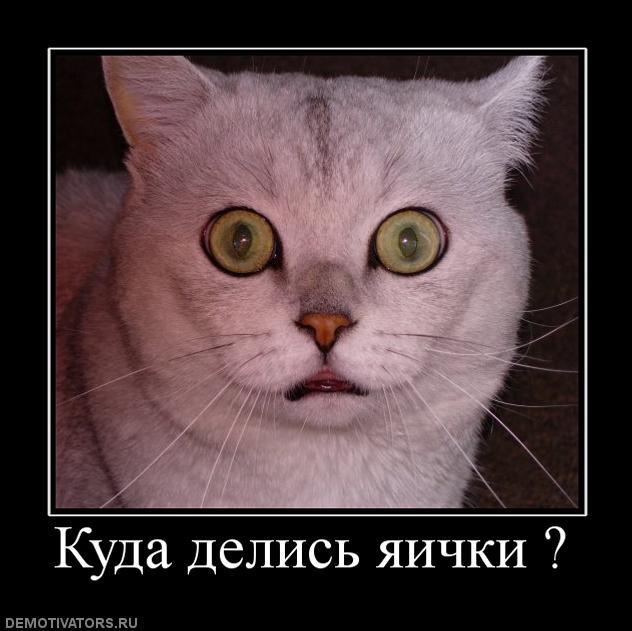 Архив российских кино и сериалов исключено, что
