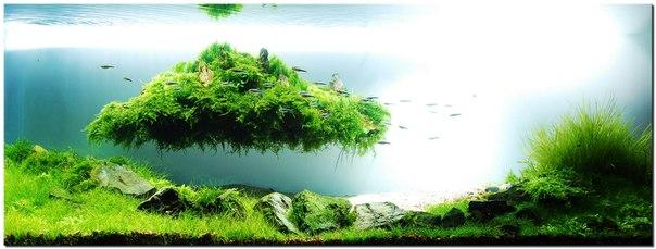 аквариумные растения покрываются черными точками