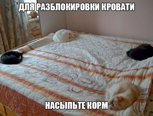 https://pp.vk.me/c543102/v543102274/14dc0/GfoM7wU_iEw.jpg