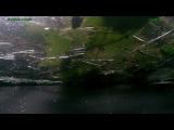 Видео из салона KIA которую придавило деревом на ЮЗЭС