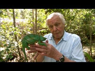 BBC Мадагаскар 4  Аттенбро и гигантское яйцо