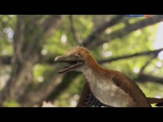 История жизни 2 Зачем динозаврам оперение ? (2012)